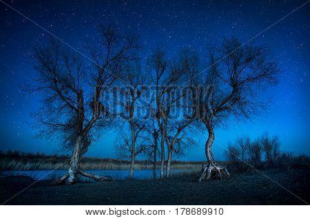 Trees Under Night Sky In The Desert
