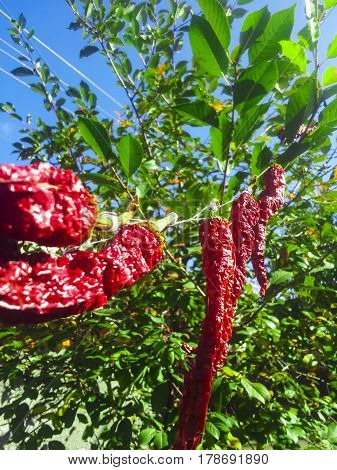 red pepper on a background of sky and trees
