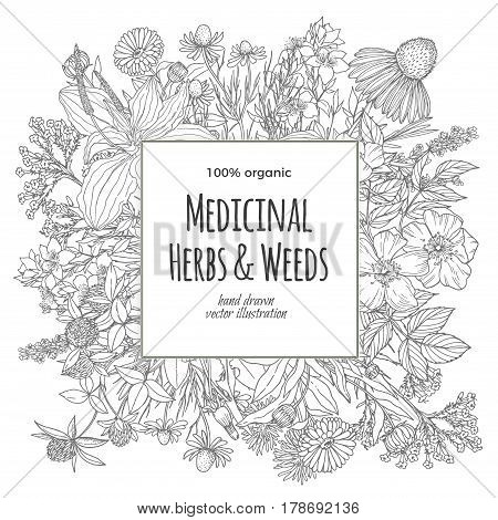 Square banner for text with medicinal flowers and herbs on the white background, vintage vector illustration, echinacea, chamomile, lavender, calendula, clover, dandelion, st john's wort, plantain, dog rose and valeriana