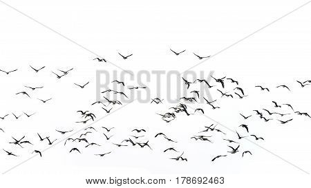 Flock Of Beautiful Migratory Lapwing Birds In Clear Winter Sky Isolated On White