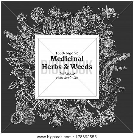 Square banner with chalk illustrations of medicinal herbs and flowers on dark background, vector vintage sketch,  echinacea, chamomile, lavender, calendula, clover, dandelion, st john's wort, plantain, dog rose and valeriana