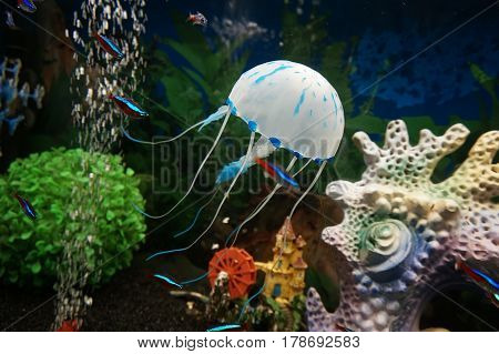 Beautiful White Jellyfish In The Water On Blue Background
