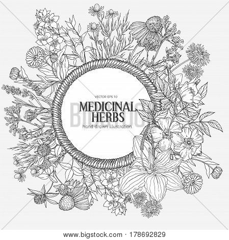 Beautiful vintage rope frame with medicinal herbs and flowers on white background, vector hand-drawn illustration, echinacea, chamomile, lavender, calendula, clover, dandelion, st john's wort, plantain, dog rose and valeriana