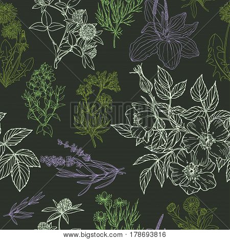 Color vector seamless pattern in green and purple colors, dark background, medicinal herbs and flowers, vector sketck illustration, vintage style, echinacea, chamomile, lavender, calendula, clover, dandelion, st john's wort, plantain, dog rose and valeria