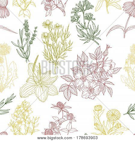 Vector seamless pattern, white background and color medicinal herbs and flowers, vintage sketch, retro style. echinacea, chamomile, lavender, calendula, clover, dandelion, st john's wort, plantain, dog rose and valeriana
