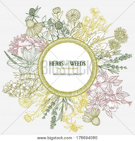 Hand-drawn rope wicker frame with place for text with medicinal herbs and flowers on background, color vector vintage sketch illustration, echinacea, chamomile, lavender, calendula, clover, dandelion, st john's wort, plantain, dog rose and valeriana