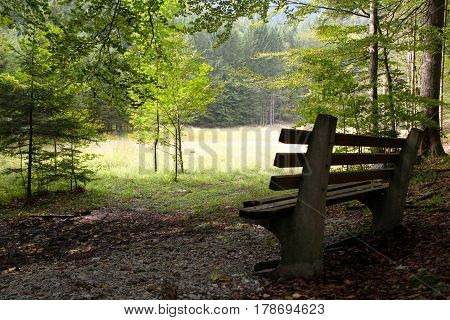 Travel To Sankt-wolfgang, Austria. The Bench In The Mountains Forest In The Sunny Day.