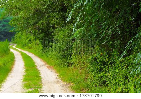 A country road by the forest line