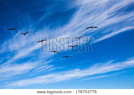 Indian summer in Canada. The pack of migratory birds flies in the cloudy sky. Old Pinawa Dam Park