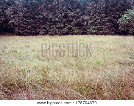 Forest trees and meadow, simple natural background backdrop, without sky, nearly just duo chrome or duotone, two-thirds, big copy space. green and magenta