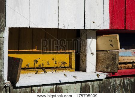 Detailed view of an old wooden colorful apiary and flying bees carrying honey on a sunny day