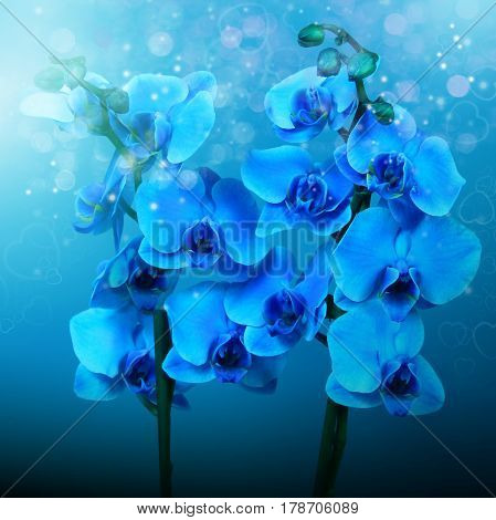 Beautiful flowers blue orchids background for cover cd and design interior
