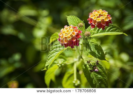 Red and yellow flowers on sunny day with lush green background