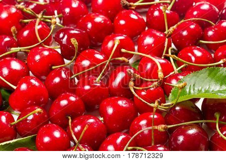 Background of ripe sweet cherry with green leaves
