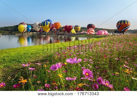 CHIANG RAI THAILAND - FEBRUARY 16 2017 : Colorful Hot air balloon over cosmos flowers with blue sky at SINGHA PARK CHIANG RAI BALLOON FIESTA 2017 Chiang rai province Thailand.