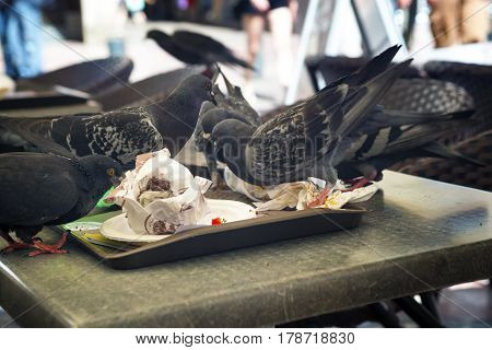 Pigeons eat up the crumbs from the table in a cafe