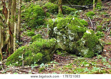 Travel To Sankt-wolfgang, Austria. The Stones With The Green Moss In The Mountains Forest.