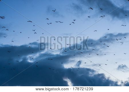 A flock of birds in the blue sky in the dusk