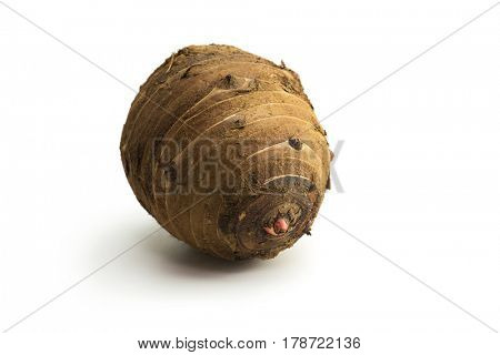 Oya-imo (Parent potato) of Satoimo potato, isolated on white.