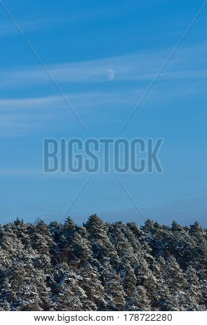 Moon above the snowy forest in the winter