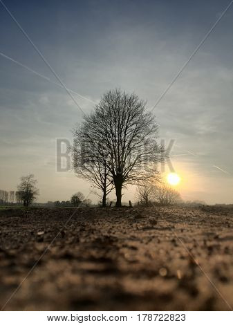 Rural sunset in the countryside with the sun setting and showing behind a lonely bare tree in the field with a dusty sand road underneath a clear blue sky