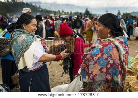 Otavalo Ecuador - February 1 2014: Woman selling a chicken at the livestock market of the town of Otavalo in Ecuador.