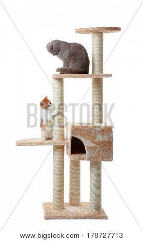 Cute funny cats and tree on white background