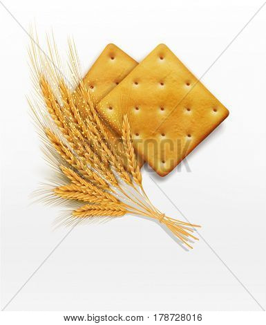 two  crackers and wheat ears isolated on white background