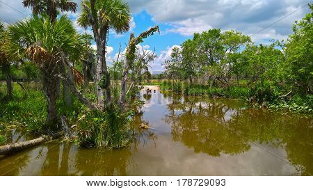 View of the steppe and wetlands are vultures among palm trees on the sand under a blue sky on the Everglades in Florida USA