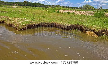 View of the bush and alligator in wetlands and water under blue sky in the Everglades in Florida USA