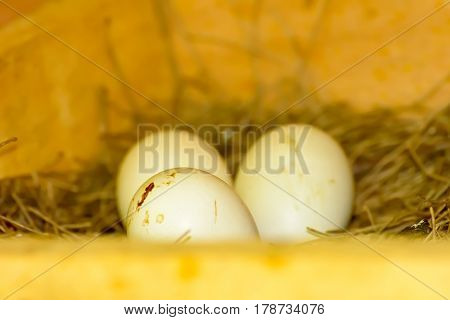 3 eggs on a pile of straw waiting to hatch in coops.