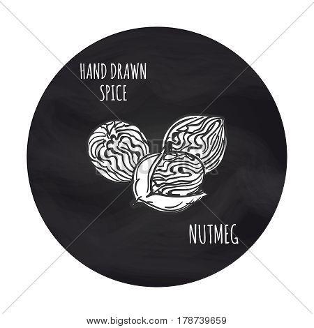 Hand drawn spice nutmeg on blackboard background, vector illustration