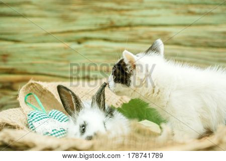 Cute Small Rabbit And Little Cat Playing On Sackcloth