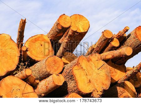 Stack of wood with logs in different sizes with blue sky in the back.