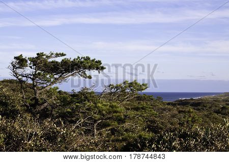 Wide view of the grassy flats and trees above the blues of the North Atlantic off the shoreline of Race Point Beach, Provincetown, Cape Cod, Massachusetts with blue skies and clouds in mid September.