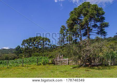 Farm In Itaimbezinho Canyon
