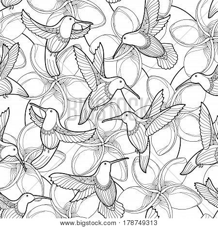 Vector seamless pattern with Plumeria flower and flying Hummingbird or Colibri in contour style on the white background. Outline tropical Frangipani and bird for summer design and coloring book.