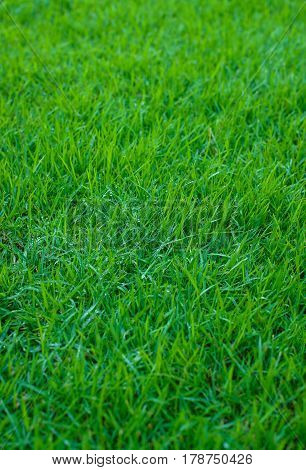 Focus on the green lawn in the front garden, turf for the background.