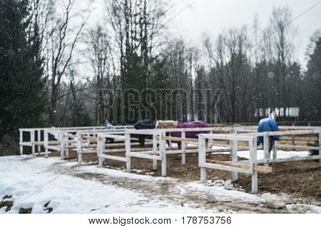 Horses in a stable in winter.  Snowing