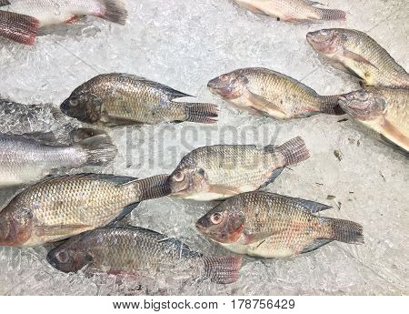 Group of fish Oreochromis nilotica freezing on ice for sell in market