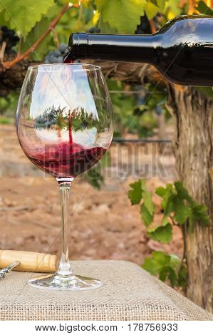 Red wine poured into a glass from a bottle on a blurred background of a vineyard before harvest