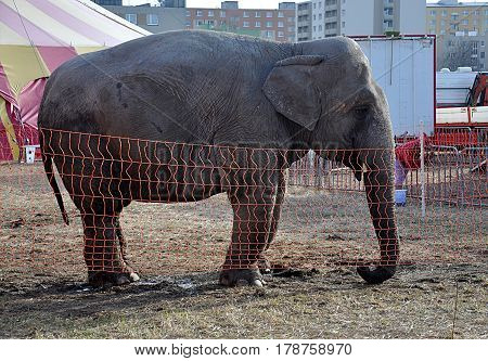 exotic African elephant in the park in day