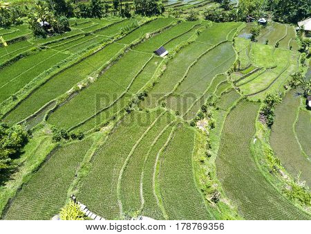 aerial view on rice terraces Bali Indonesia
