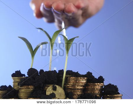 Man hand watering young tree on coin stack in growth business concept