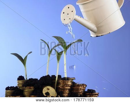 Watering can and coin stack on soil