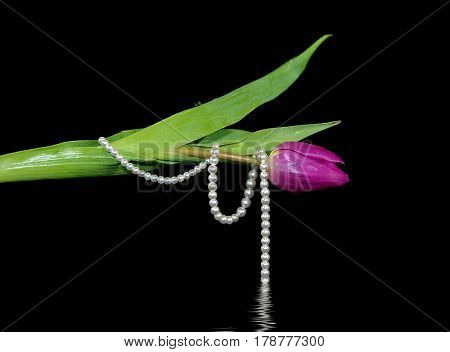 pink tulip wrapped in string of pearls with black water reflection