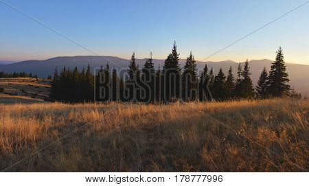 Field Of Dry Wild Grass And Silhouettes Of Fir-trees At Sunset. Beautiful Evening In The Mountains.