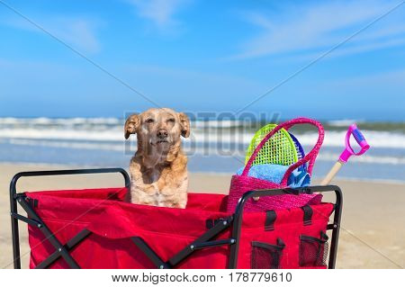 Dog on vacation at the beach