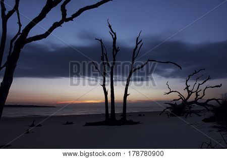 Dramatic silhouettes of dead trees on the beaches of Jekyll Island, Georgia at sunrise during springtime along the Atlantic Ocean coastline
