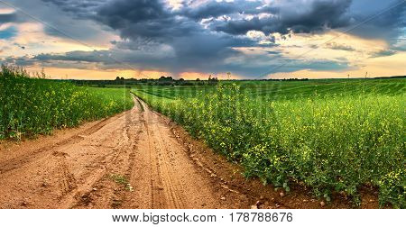 Dirt Road In Green Colza Fields. Spring Rain And Storm